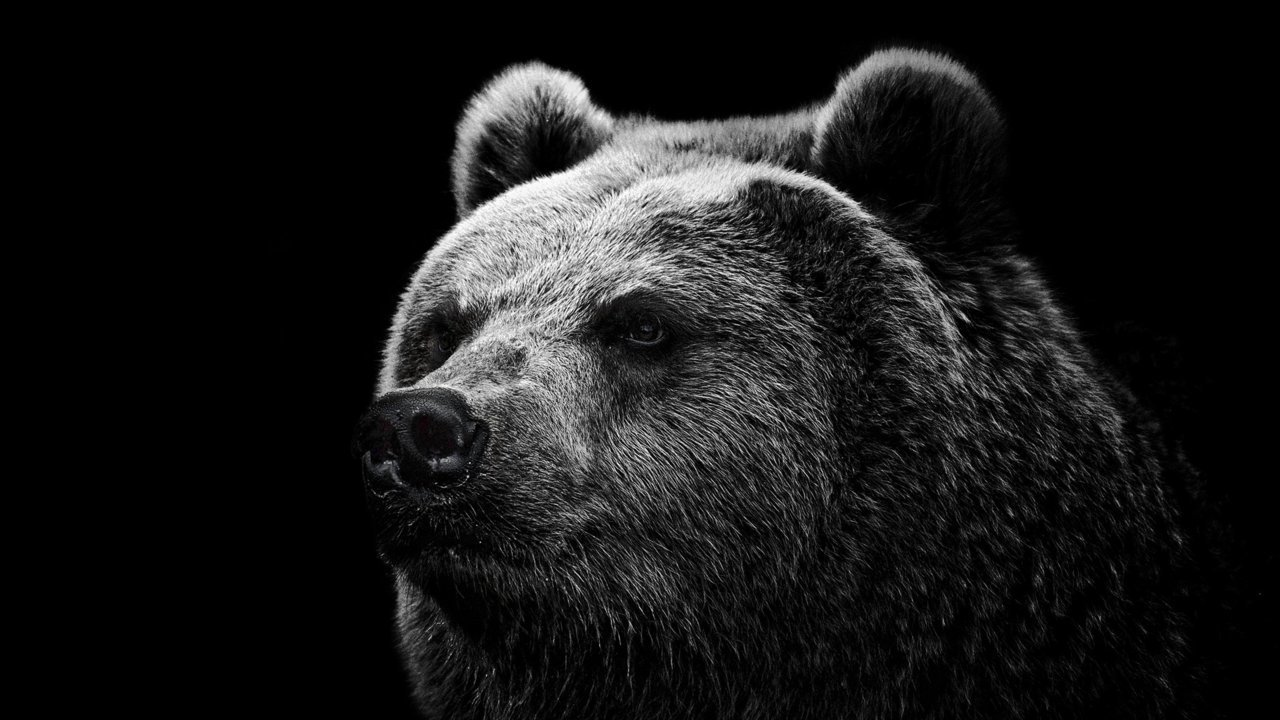 bear_grizzly_bear_eyes_nose_85885_1920x1080.jpg