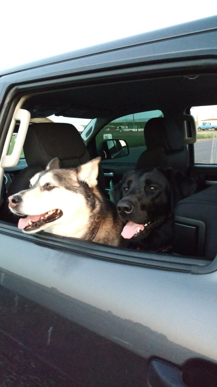 Who S Got Dogs Post Your Pup Page 25 Toyota Tundra Forum