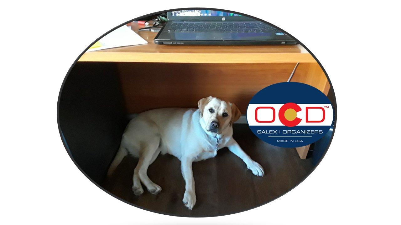 official company dog.jpg
