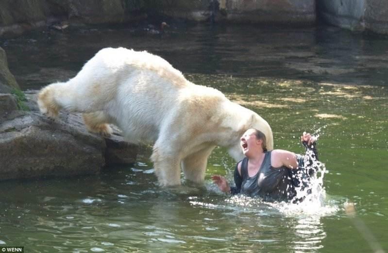polar_bear_vs_human.jpg