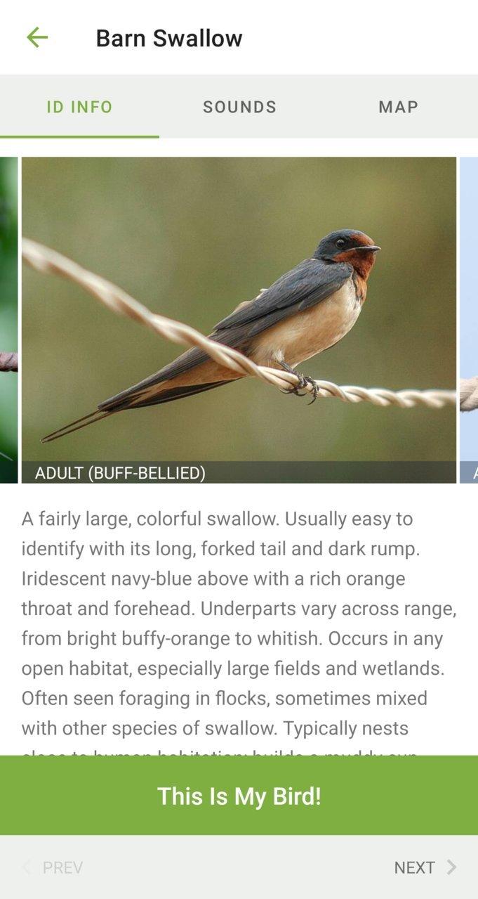 Screenshot_20210711-225602_Merlin Bird ID.jpg