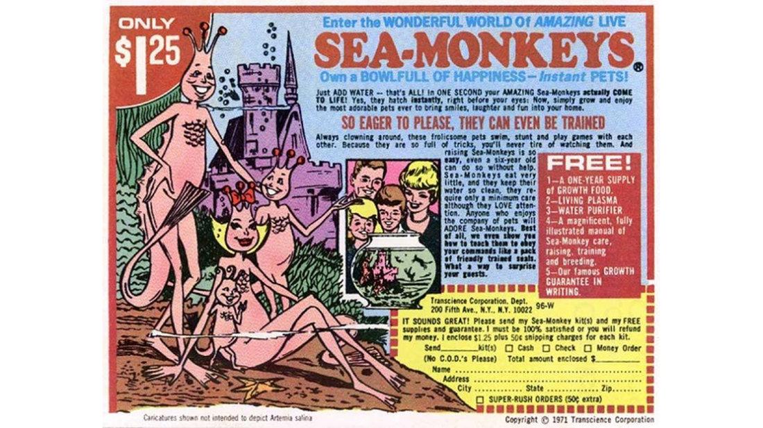 SeaMonkeys.jpg