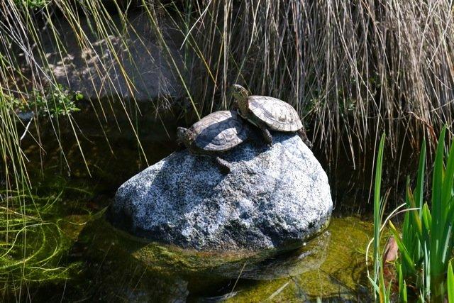 Turtle Twosome.jpg
